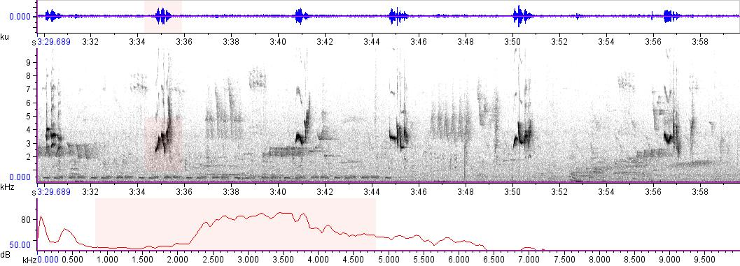Sonogram of recording #AV 9458