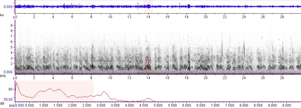 Sonogram of recording #AV 9470