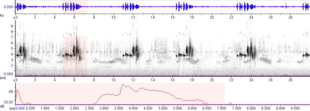 Sonogram of recording #AV 9475