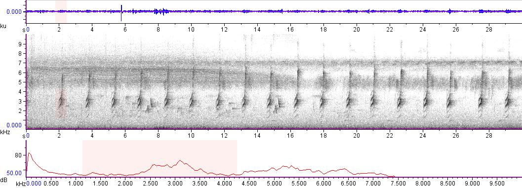 Sonogram of recording #AV 9480
