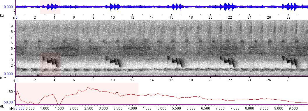 Sonogram of recording #AV 9490