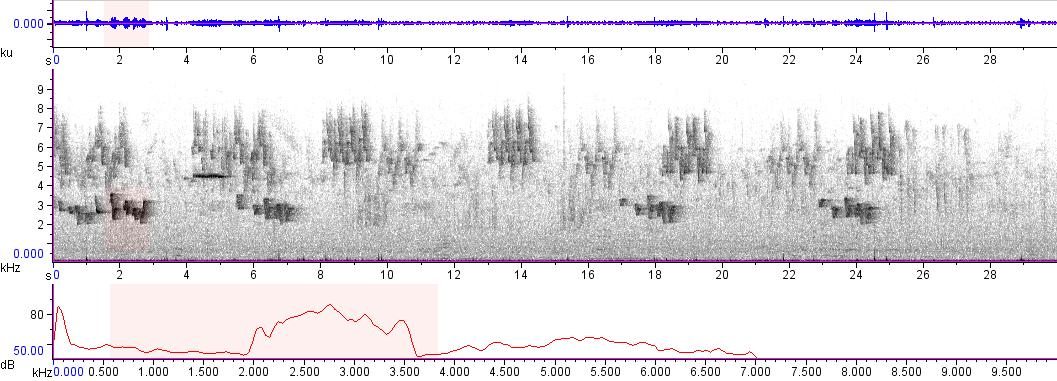 Sonogram of recording #AV 9491