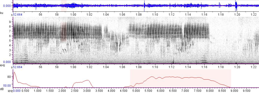 Sonogram of recording #AV 9501