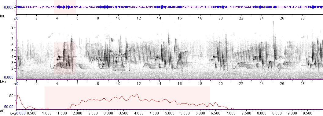 Sonogram of recording #AV 9505