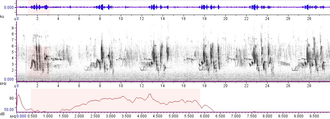 Sonogram of recording #AV 9506