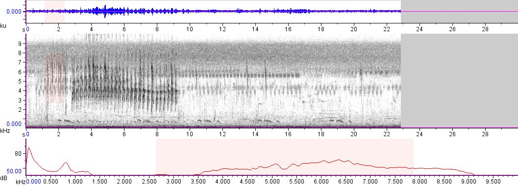Sonogram of recording #AV 9513