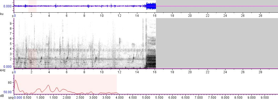 Sonogram of recording #AV 9520