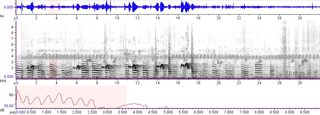 Sonogram of recording #AV 9522