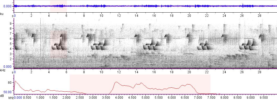 Sonogram of recording #AV 9536