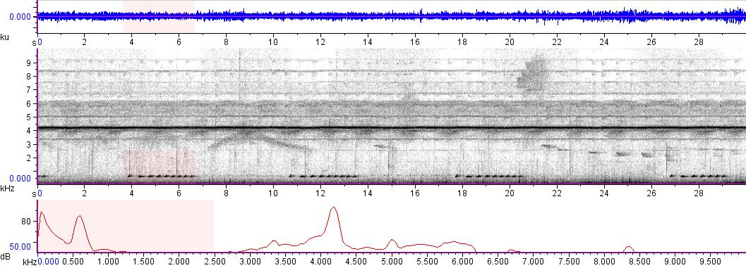 Sonogram of recording #AV 9545