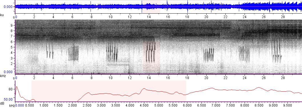 Sonogram of recording #AV 9565
