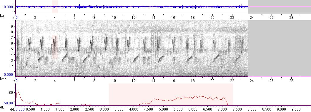 Sonogram of recording #AV 9571