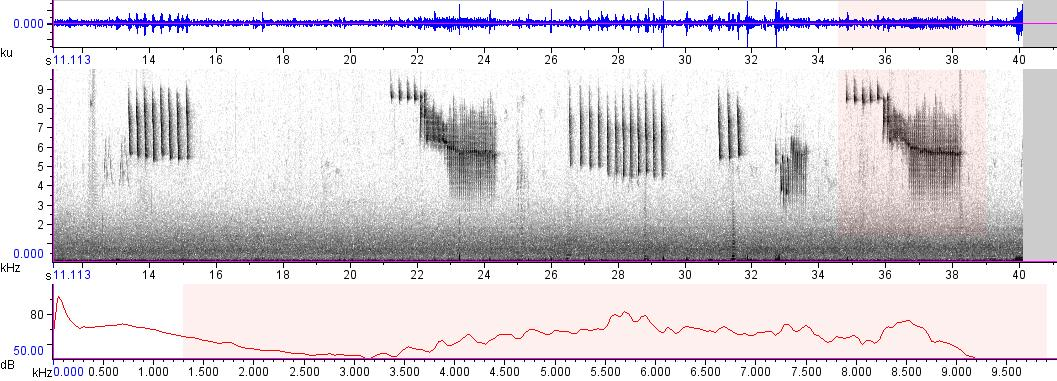 Sonogram of recording #AV 9574