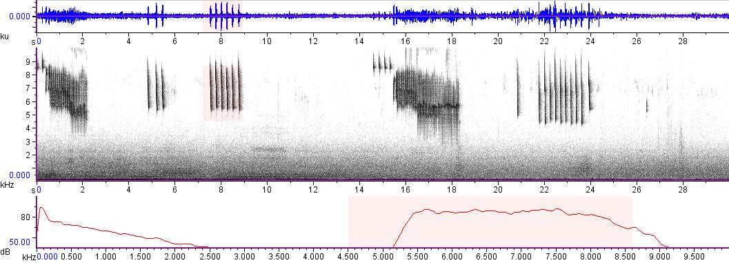 Sonogram of recording #AV 9575