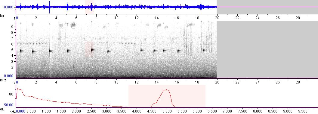 Sonogram of recording #AV 9585
