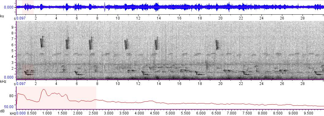 Sonogram of recording #AV 9600