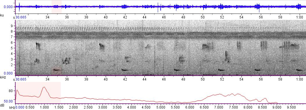 Sonogram of recording #AV 9602