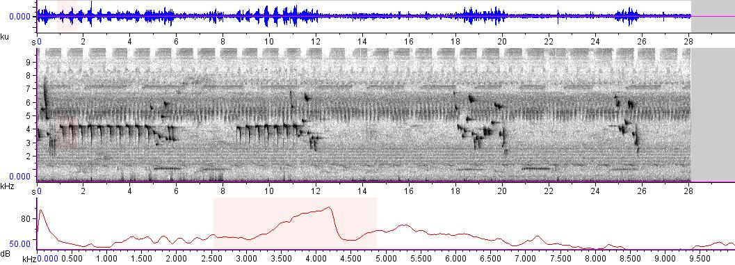 Sonogram of recording #AV 9606
