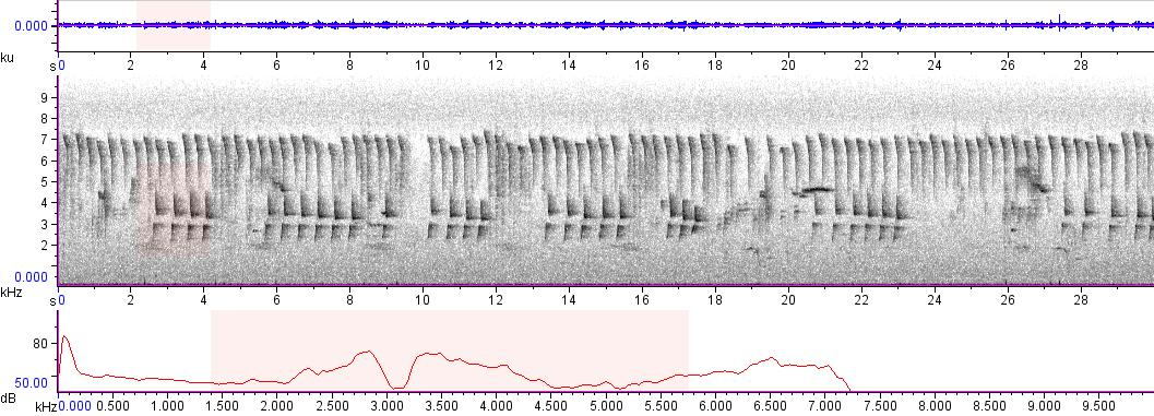 Sonogram of recording #AV 9619