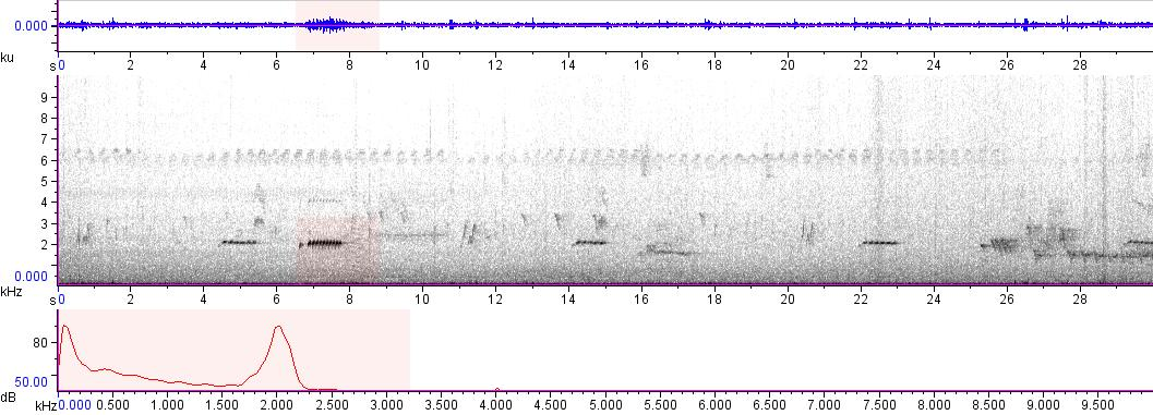 Sonogram of recording #AV 9643