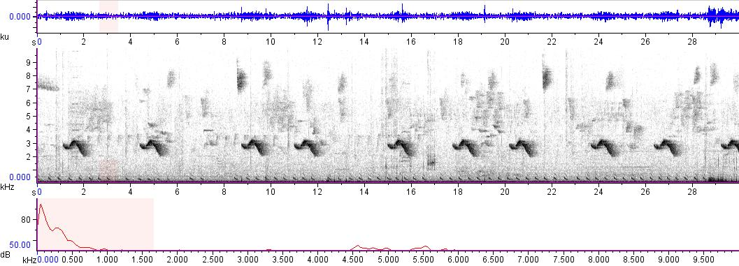 Sonogram of recording #AV 9661