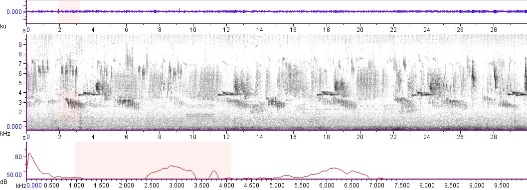 Sonogram of recording #AV 9665