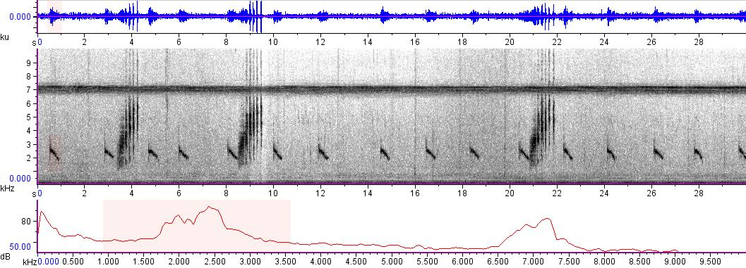 Sonogram of recording #AV 9668