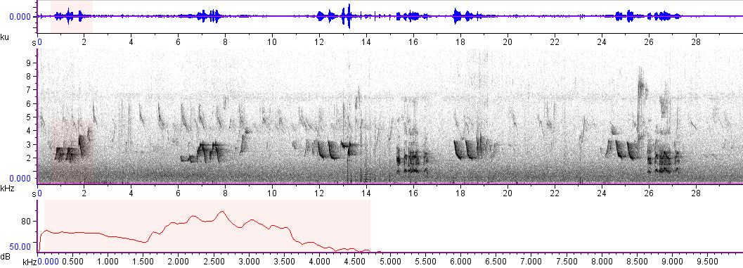 Sonogram of recording #AV 9673