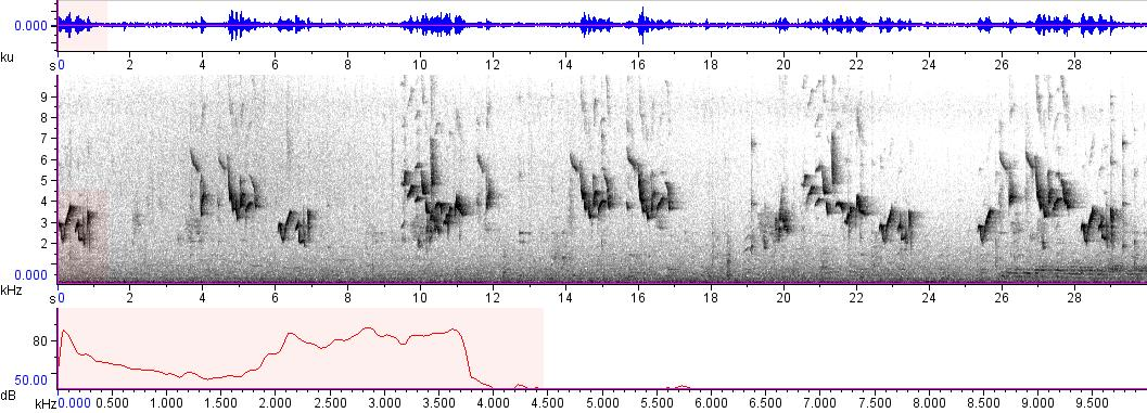 Sonogram of recording #AV 9674