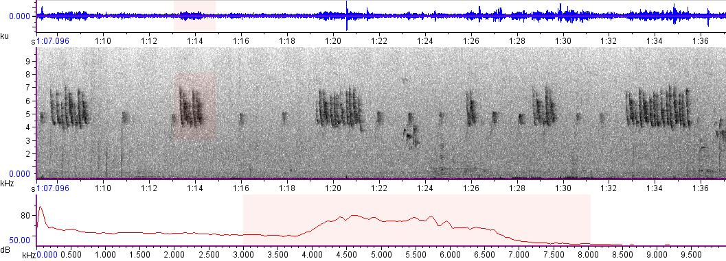 Sonogram of recording #AV 9681