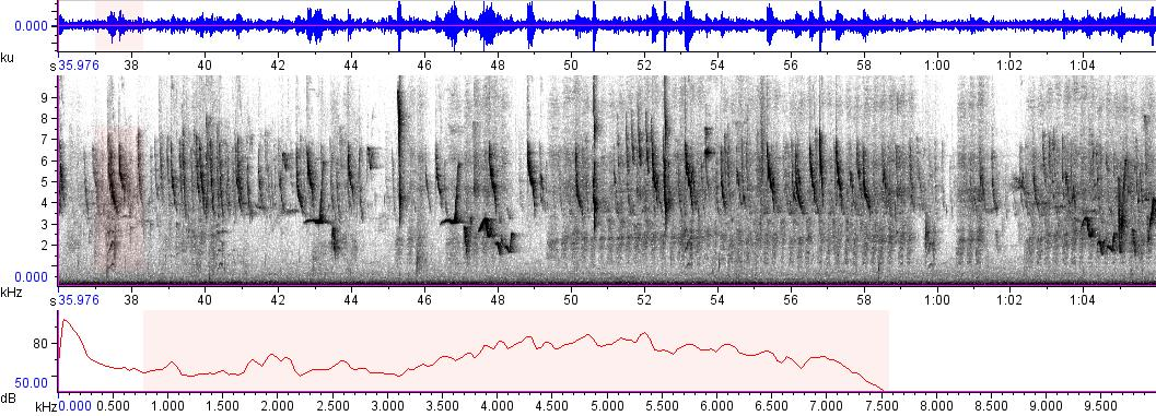 Sonogram of recording #AV 9684
