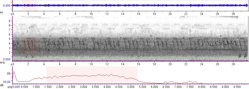 Sonogram of recording #AV 9687