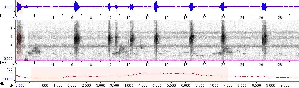 Sonogram of recording #AV 10060