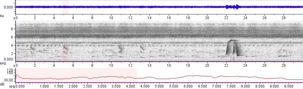 Sonogram of recording #AV 10066