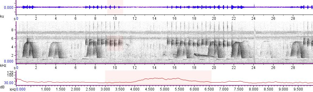 Sonogram of recording #AV 10070
