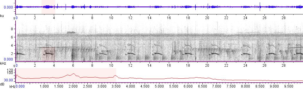 Sonogram of recording #AV 10073