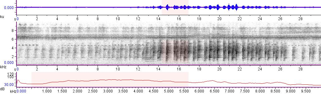 Sonogram of recording #AV 10077