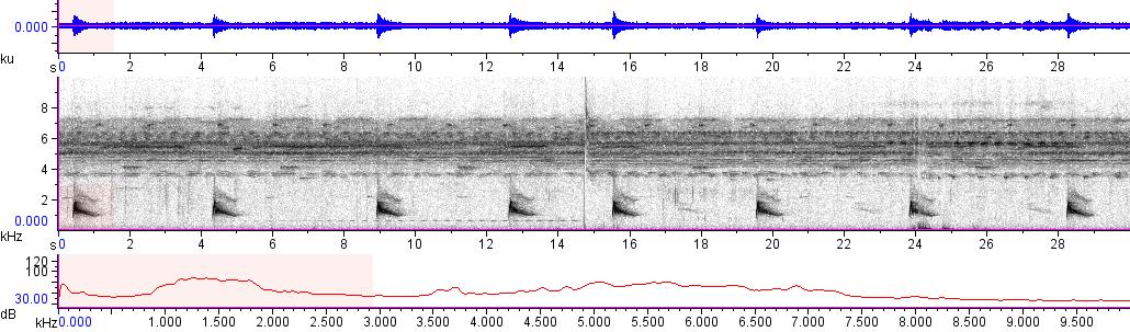Sonogram of recording #AV 10079