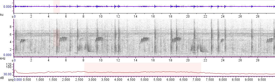 Sonogram of recording #AV 10088