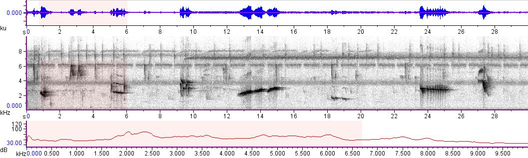 Sonogram of recording #AV 10090