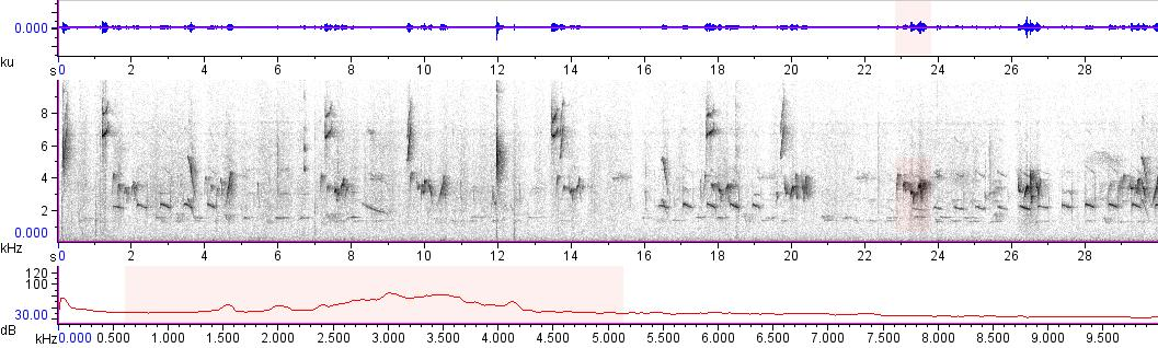 Sonogram of recording #AV 10094