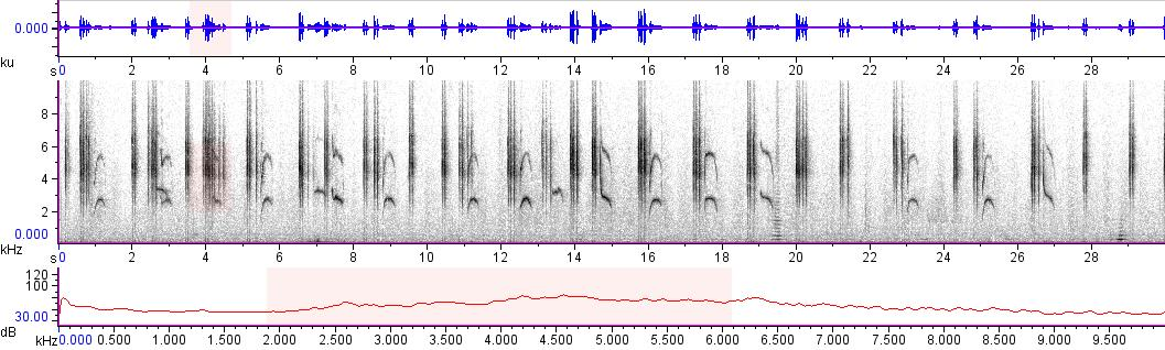 Sonogram of recording #AV 10102