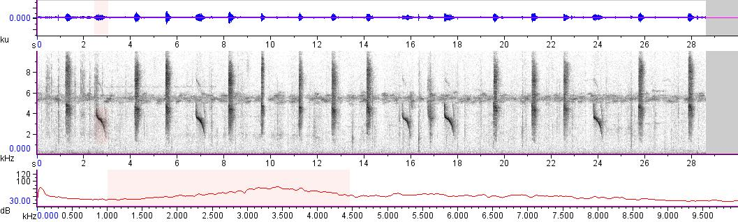 Sonogram of recording #AV 10114