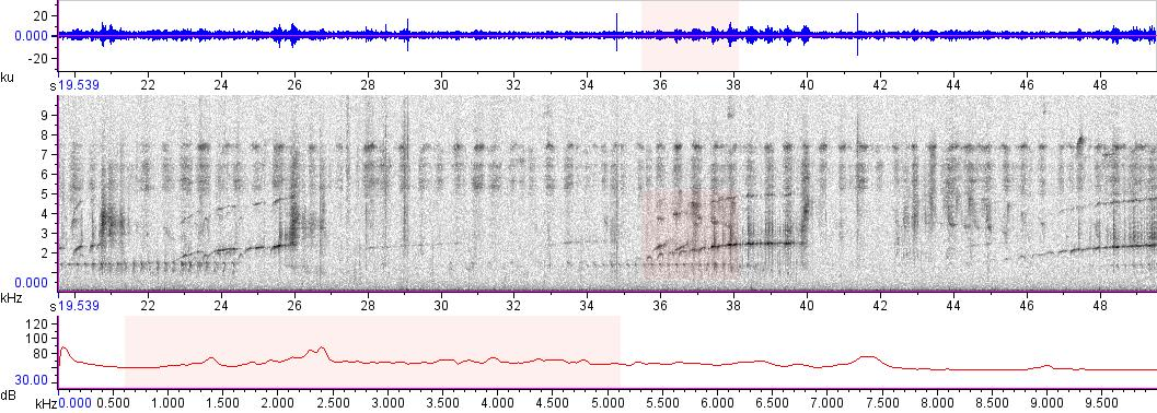 Sonogram of recording #AV 10175