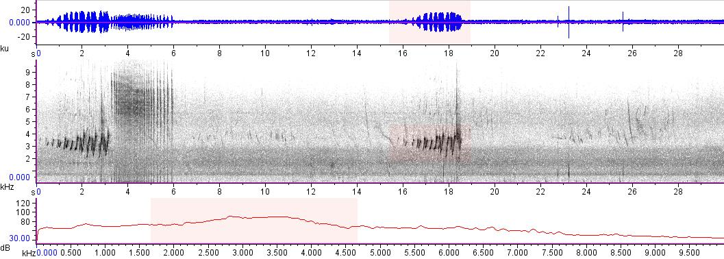 Sonogram of recording #AV 10191