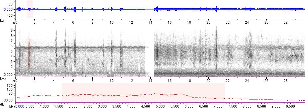 Sonogram of recording #AV 10194