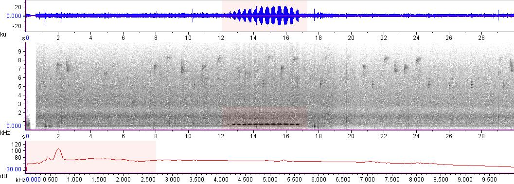 Sonogram of recording #AV 10196