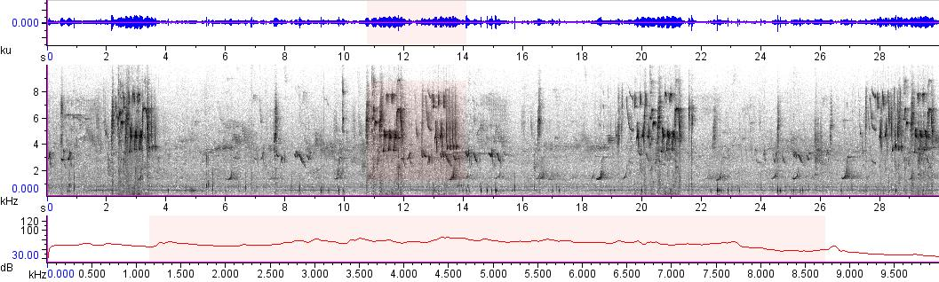 Sonogram of recording #AV 10205