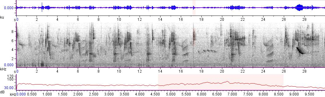 Sonogram of recording #AV 10213