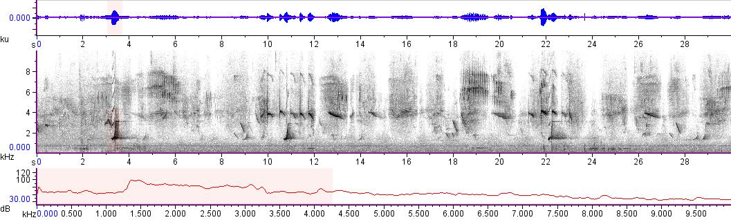 Sonogram of recording #AV 10218
